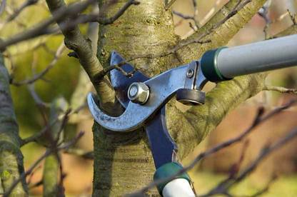 If branches of your neighbour's tree encroach on your land, you can cut them back to the boundary line.