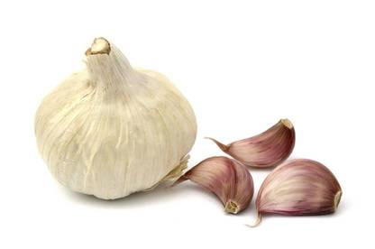 10may gardeningwithoutinsecticides garlic