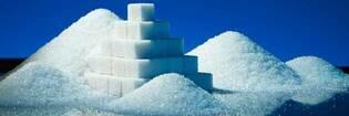 13feb sugar hero default