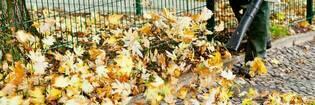 14sep leaf blower vac hero default
